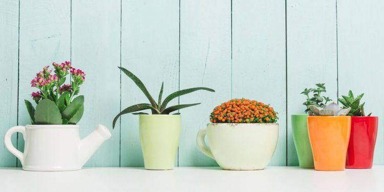 گل و گیاه مقاوم
