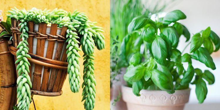 گیاه هوای باز گل و گیاه