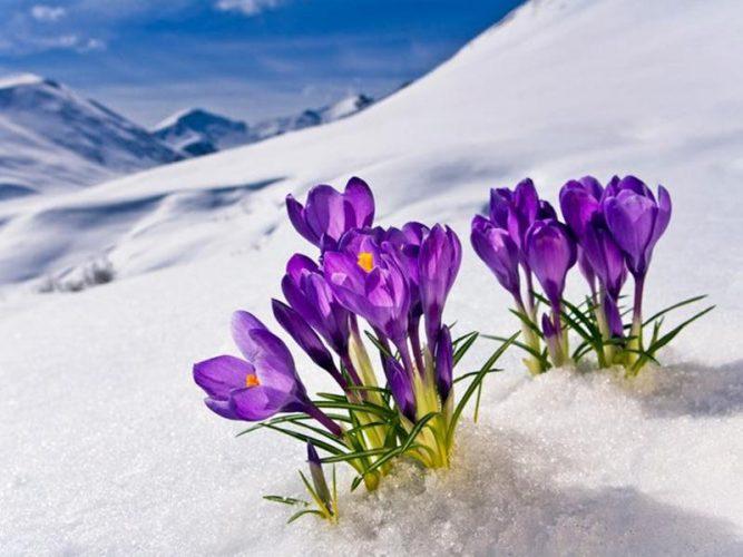 گل های زمستانی