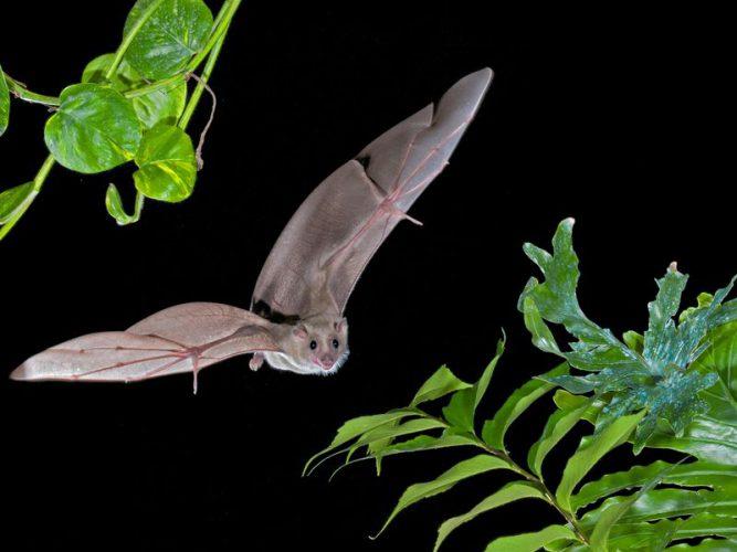 خفاشها در طبیعت