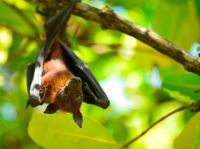 خفاش در طبیعت