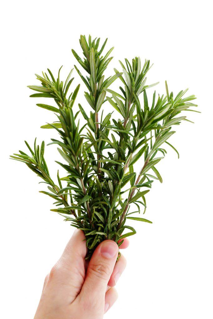 پرورش گیاهان دارویی رزماری