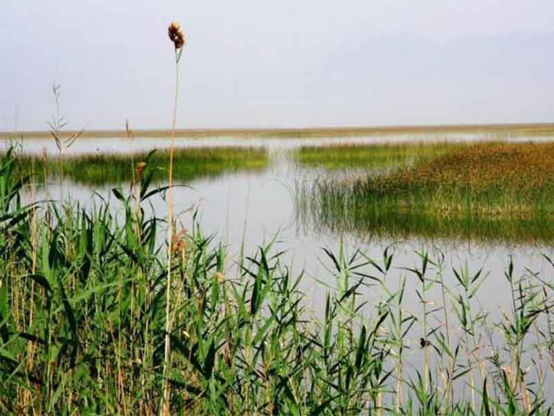 محیط زیست ایران و آبزیان