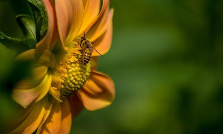 عکاسی از طبیعت و حشرات