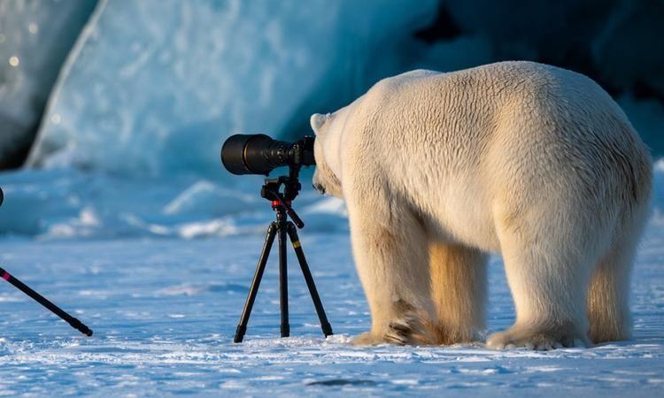 عکاسی از طبیعت و حیات وحش