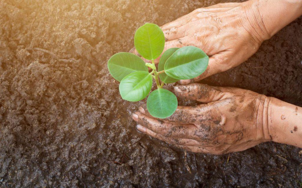 از باغ خود چطور مراقبت کنیم و بهترین روشهای نوین باغبانی کدامند؟