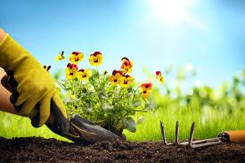 باغ و باغبانی
