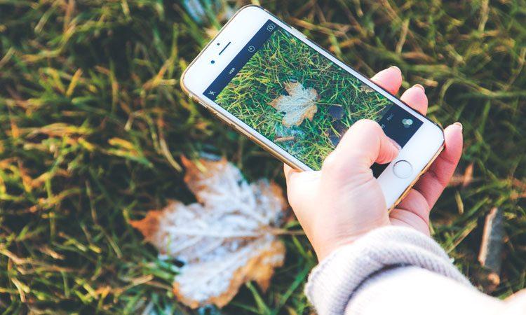عکاسی از طبیعت و گل ها