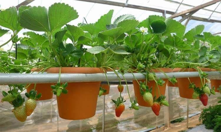 آبیاری گیاهان و باغچه