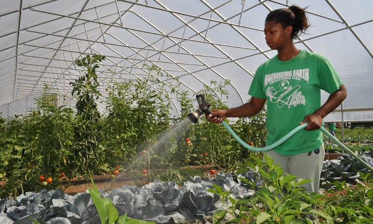 آب دادن به گیاهان