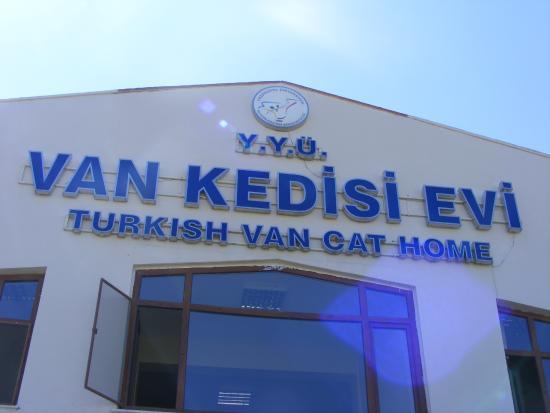 خانه گربه ها در وان ترکیه