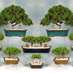 بن سای این درختچه های زیبا و خاص قابل نگهداری در آپارتمان را بیشتر بشناسید