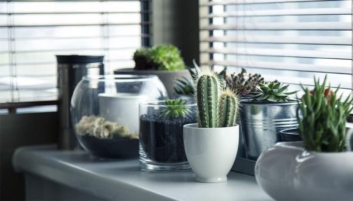 فواید خرید گل و گیاه آپارتمانی